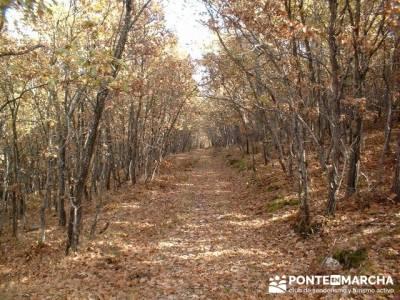 Monte La Umbría - Excursiones desde Madrid; grupos de senderismo madrid